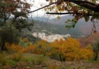 Arranca en el Valle del Genal la temporada de castaña
