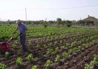Agricultores y ganaderos reciben el primer pago de ayudas a la contratación de seguros agrarios por casi 4,5 millones de euros
