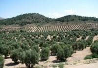 UPA-Jaén apuesta por la consolidación de los regadíos para garantizar su competitividad