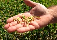 """El Ministerio de Agricultura, Alimentación y Medio Ambiente publica el nuevo número del """"Informe de Contratación del Seguro Agrario"""" del tercer trimestre de 2016"""