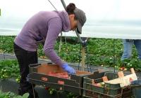 El Ministerio de Agricultura, Alimentación y Medio Ambiente concede los Premios de Excelencia a la Innovación para Mujeres Rurales 2016
