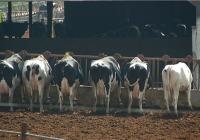 Andalucía solicita casi 342.000 euros para  compensar a 61 ganaderos que van a reducir la  producción de leche de vaca