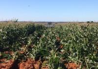 La Renta Agraria crece un 5,1% en 2016 con un valor de 25.255 millones de euros
