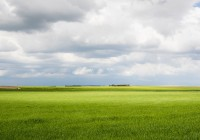 UPA: Balance agrario 2016