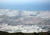 COAG analiza la situación de los cultivos almerienses y el mercado europeo tras la ola de frío