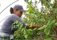 El paro bajó en diciembre en Andalucía un 14,43% en el sector agrario