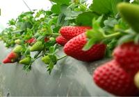 Publicada la convocatoria de pago a programas operativos de las Organizaciones de Productores de Frutas y Hortalizas para 2017