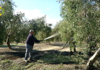 COAG afirma que existe en los olivareros satisfacción ante una relación calidad/precio equilibrada y sostenible del aceite de oliva