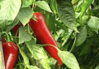 Más de 1.100 empresas andaluzas exportan frutas y hortalizas a 102 países, principalmente a mercados de la UE