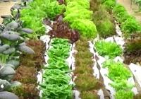 Agricultura aumenta un 18% las ayudas para los productores hortofrutícolas y un 45% para el sector ecológico andaluz
