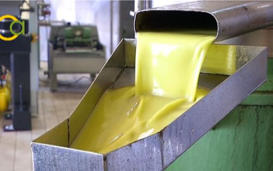 La producción de aceite en la provincia de Córdoba asciende a 111.023 toneladas en el tercer mes de campaña