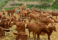 COAG Andalucía pide a la Consejería una reunión para poner en marcha la mesa del caprino de leche