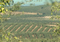 La renta agraria de 2016 aumentó un 7,1%  y superó los 8.800 millones de euros en Andalucía
