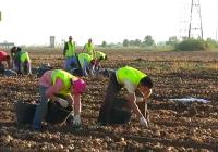 UPA-Andalucía avisa de los continuos fallos en el programa PAC 2017