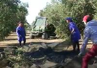 UPA-Jaén y ADEMUR demandan más formación de las mujeres para alcanzar la verdadera igualdad  de oportunidades en el sector olivarero