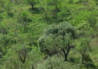 La superficie de almendro alcanza en Andalucía su máximo histórico con más de 190.000 hectáreas cultivadas en 2016