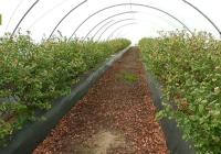 El último estudio cartográfico de la Junta recoge una superficie de invernaderos de 1.200 hectáreas en Cádiz y Sevilla