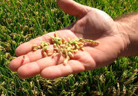 UPA Andalucía estima unas pérdidas de 10 millones € en variedades de arroz redondo en la presente campaña