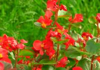 VÍDEO: Flores comestibles en Vélez-Málaga