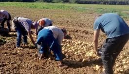 ASAJA-Sevilla denuncia la especulación de las grandes superficies para hundir el precio de la patata nacional