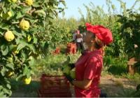 La resolución provisional de las ayudas a la modernización de explotaciones agrarias de 2016 contempla 1.262 beneficiarios