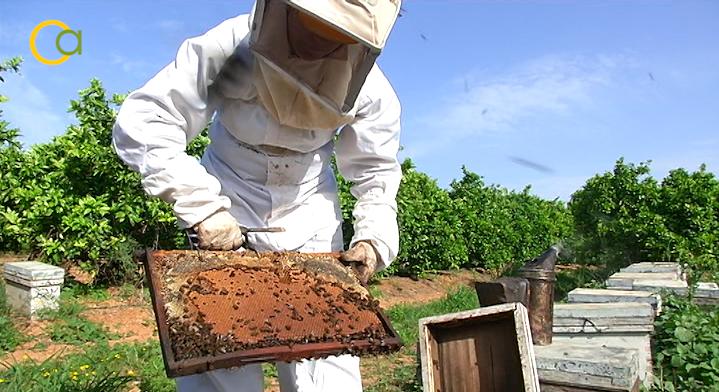 El Gobierno aprueba la modificación de la norma de calidad de la miel en beneficio de consumidores y apicultores