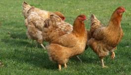 El Ministerio de Agricultura analiza con el sector avícola de puesta la situación del mercado y las líneas de actuación