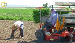 VÍDEO: Siembra de tomate en el Bajo Guadalquivir