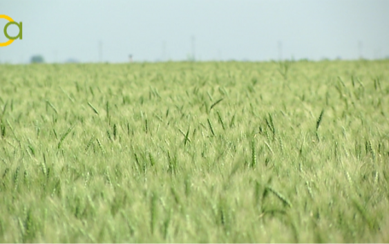 Se reducen significativamente los módulos del IRPF de cereales, tomate, bovino de leche y ganadería extensiva