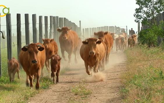 COAG: Los sectores ganaderos, muy afectados por la sequía