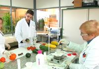 VÍDEO: Variedades de hortalizas en Las Palmerillas