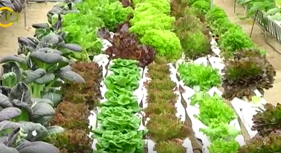 La Junta organiza en el Ifapa de La Mojonera una jornada para celebrar el Día Internacional de la Fascinación por las Plantas