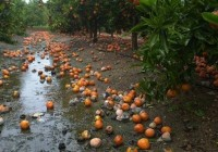 La Comisión General de ENESA aprueba el proyecto del 40º Plan de Seguros Agrarios Combinados