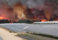 """UPA: """"Los agricultores de Huelva están indignados con los que relacionan la agricultura con el incendio de Doñana"""""""