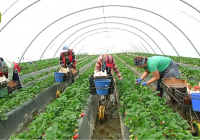 La Junta destina más de 3,3 millones de euros a respaldar la fusión e integración de entidades del sector agroalimentario