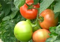Agricultura reclama al Gobierno que no se excluya a las hortalizas de las medidas excepcionales para paliar el veto ruso