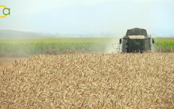 Asaja pide al Gobierno una norma que también indique el origen de los cereales y oleaginosas