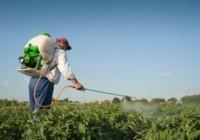 ASAJA-Sevilla lamenta la decisión del pleno del uso de fitosanitarios en las denominadas superficies de interés ecológico