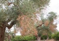 Agricultura refuerza el personal dedicado a garantizar la sanidad vegetal de los cultivos de Andalucía