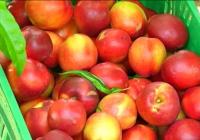 Miranda analizó con las entidades representativas del sector hortofrutícola el desarrollo de la campaña 2017 de fruta de verano