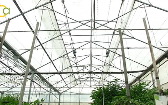 La Junta y el sector hortícola del litoral oriental colaboran en la gestión de los restos vegetales procedentes de invernaderos