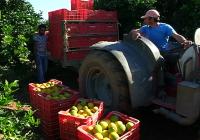 VÍDEO: Las Organizaciones Agrarias valoran la campaña de cítricos