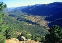 Esperanza Orellana analiza con las comunidades autónomas el Plan de Actuación del Sector Forestal