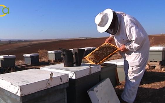La agresividad del ácaro Varroa está acabando con miles de colmenas en todo el país