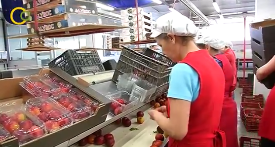 El secretario general de Agricultura y Alimentación, Carlos Cabanas, se reúne con el sector de fruta dulce