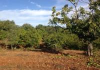 La Junta abre el plazo de información pública del proyecto de decreto del Registro de Explotaciones Agrarias y Forestales
