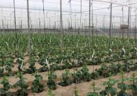 Agricultura abre el plazo de consulta pública previa para la elaboración del nuevo Decreto de Producción Integrada