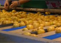La patata aumenta su presencia en la cesta de la compra, con un consumo medio de 30,19 kilos por persona y año