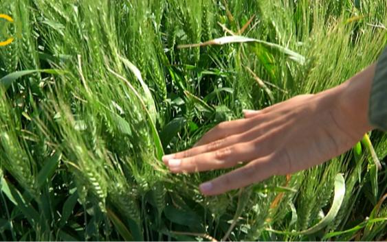 La Junta inicia el pago de 558,8 millones del anticipo de las ayudas directas de la Política Agrícola Común 2018