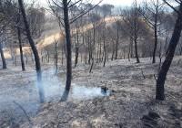 COAG Andalucía recuerda la importancia de la prevención y la reforestación de las zonas afectadas